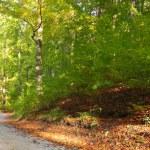 Rural autumn scenery — Stock Photo #9687770