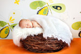 Cute baby sleeps in a nest — Stock Photo