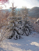Winter landscape in the mountains — Стоковое фото