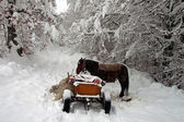 A horse carriage in winter — Stock Photo