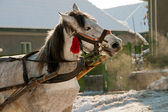 Um cavalo branco — Foto Stock