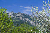 Spring season in mountain — Stock Photo