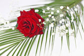 Rose in a festive decoration — Stock Photo
