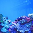 Aquarium — Stock Photo #9615445