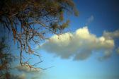 Pobočka suchého dříví na obloze — Stock fotografie