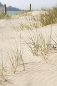 Beach Sand Dune, Cornwall, UK. — Stock Photo
