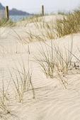 Beach Sand Dune, Cornwall, UK. — Stock Photo
