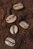 Arabic Coffe Beans on Ground Coffee. — Stock Photo