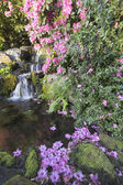 Rhododendron Flowers by Waterfall — Stock Photo