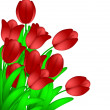 Bunch of Red Tulips Flowers Isolated on White Background — Stock Photo #9342155