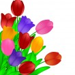 Bunch of Colorful Tulips Flowers Isolated on White Background — Stock Photo