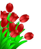 Bunch of Red Tulips Flowers Isolated on White Background — Foto de Stock