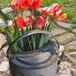 Tulips — Stock Photo #10221477