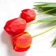 Stock Photo: Tulips isolated