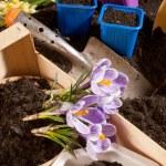 Gardening — Stock Photo #8070041