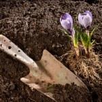 Gardening — Stock Photo #8942155