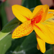 Stock Photo: Yellow flower in foreground under natural conditions