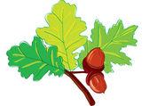 Leaves oak — Stock Vector
