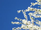 Flowers on sky — Stock Photo