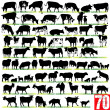 Stock Vector: Dairy Cattle Silhouettes Set