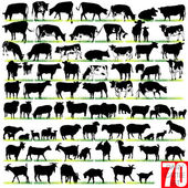 Dairy Cattle Silhouettes Set — Stock Vector
