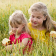Sisters in field — Stock Photo