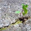 New life growing from concrete — Stock Photo #8597436