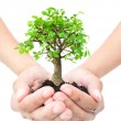 Tree in hands — Stock Photo