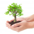 Tree in a hands — Stock Photo