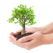 Tree in a hands — Stock Photo #8597599