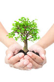 Tree in hands — Stock Photo