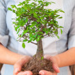 Business woman holding tree — Stock Photo