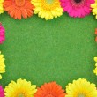 Spring flower frame — Stock Photo