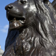 Trafalgar Square Lion - Foto de Stock