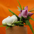 Flowers against orange background — Stock Photo