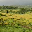 Landscape of bali, indonesia — Stock Photo