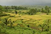 Landscape of bali, indonesia — Stock Photo