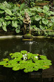 Garden pond detail — Stock Photo