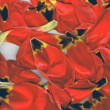 Red tulip petals - Stock Photo