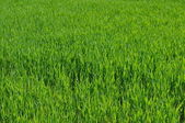 Meadow grass — Stock Photo