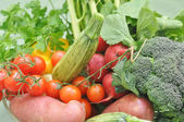 Vegetables — Foto de Stock