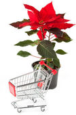 Closeup Poinsettia flower with sopping cart — Stock Photo