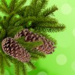 Foto Stock: Green branch of Christmas tree with cones over green background