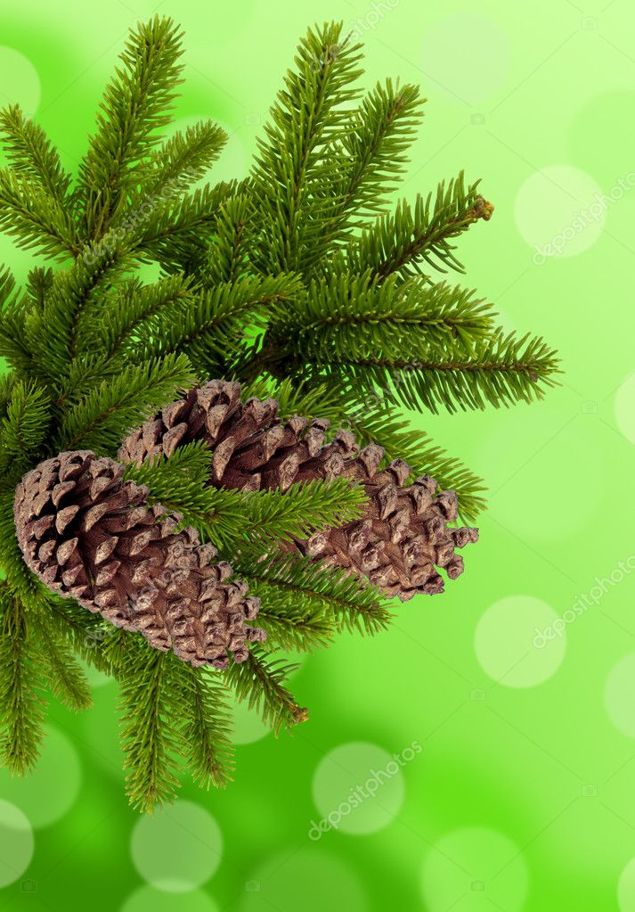 Green branch of Christmas tree with cones over green background — Stok fotoğraf #8024748