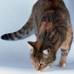 gato y comida — Foto de Stock