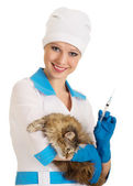 Vet nurse makes the injection of a cat — Stock fotografie