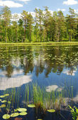 Forest lake in summer Scandinavia — Stock Photo