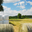 Harvested field with straw bales packaged — Stock Photo
