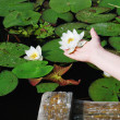 Female hand with a water lily against the lake — Stock Photo