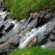Close-up of a stream in green grass. — Stock Photo